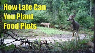 How Late Can You Plant Food Plots For Deer