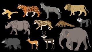 Indian Mammals - Animals Series - Elephant, Tiger, Bear - The Kids Picture Show (Fun & Educational)