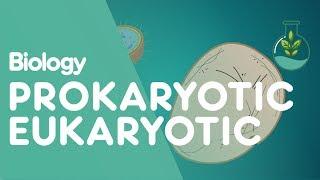 Prokaryotic vs Eukaryotic: The Differences | Cells | Biology | FuseSchool