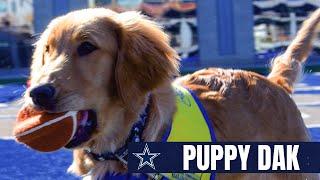 Puppy Dak Ready For Camp | Dallas Cowboys 2020