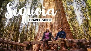 Sequoia National Park Travel Guide | Things to do & see on a weekend