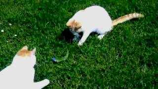 Свежая подборка, Приколы с кошками