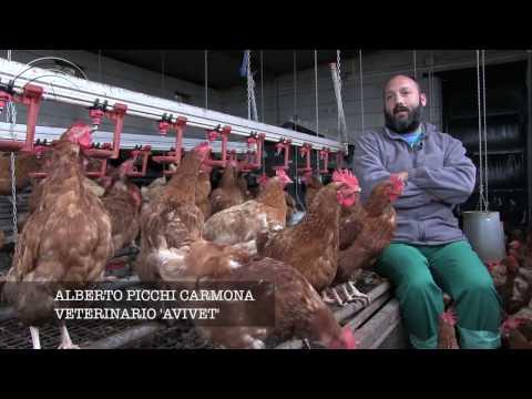 Fotograma del vídeo: Avicultura Ecológica