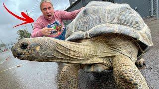 GIANT TORTOISE ESCAPE!! | BRIAN BARCZYK