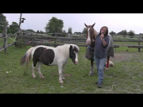 Sesso del cavallo i