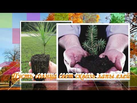 День работников леса 2018 // С днём работников леса 2018