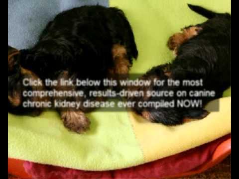 Video How to recognize dogs kidney failure symptoms | Help to stop & reverse dogs kidney failure symptoms