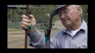 How To Side-whip Walnut Trees – UCANR