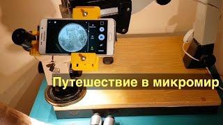 Путешествие в микромир. Или что можно увидеть в микроскоп.
