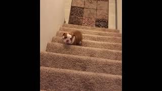 Очаровательная собака стоит взглянуть | Приколы до слез - Collab #66