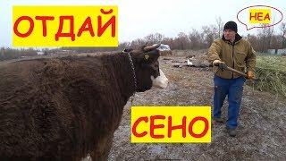 Посылка от Василька / Поставили камеру в коровник / Коровы теперь дома