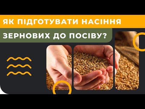 Как подготовить семена зерновых к посеву 2019?