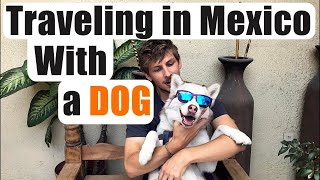 bringing a dog to mexico and what you need to know!