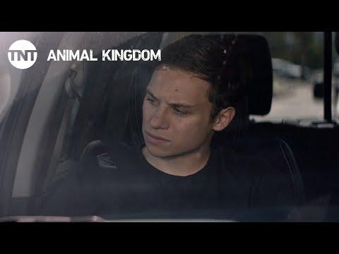 Animal Kingdom 2.07 (Preview)