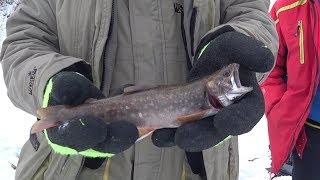 Подледная рыбалка на гольца