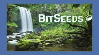 What is BitSeeds, the Rainforest Foundation