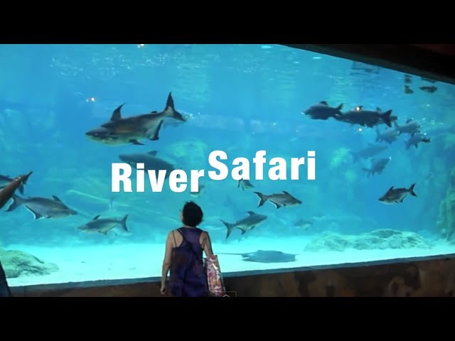 Singapore River Safari (LARGEST Freshwater TANK!!!!) (4/7/2013)