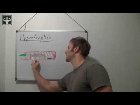 Hypertrophie und Hyperplasie - Biologische Erklärung für Muskelaufbau