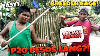 HALAGANG P20 PESOS LANG MAY BREEDER CAGE NA SI EKUNG LOFT NAG ALA-CARPENTIRITER!