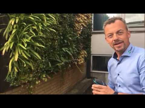 Se och hör Torben Hoffmann berätta om hur man bygger en BGreen-it Living Wall grön vägg