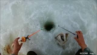Клев рыбы на воткинском пруду