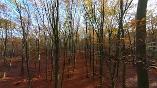 Flying Through The Autumn Forest - Part 5 - Relax - Soothing - FPV - 4K ( no Sound )