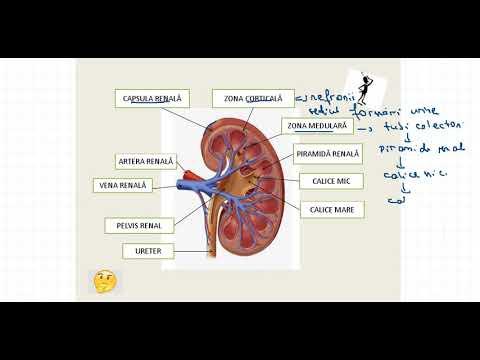 care medicamentele alungă paraziții din corp condiloamele din cauza anusului