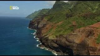 Дикие Гавайи - Огненный край. Wild Hawaii - Land of Fire 2013 Nat Geo Wild