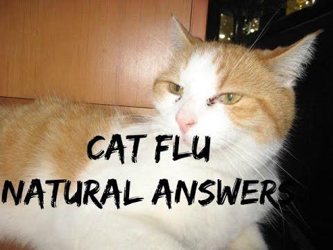 Video Cat Flu: 5 Natural Answers