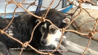 Carea Castellano Manchego Stand Exposicion Canina Internacional Talavera de la Reina