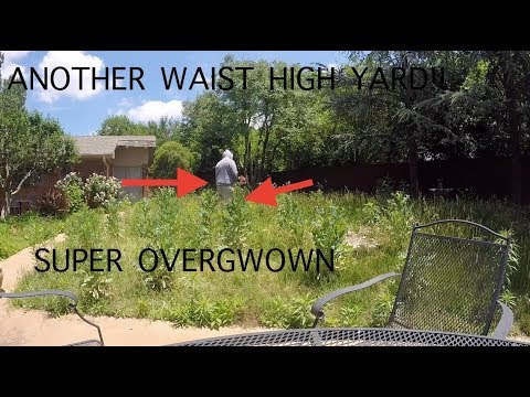 WAIST HIGH YARD | DEWALT HEDGE TRIMMER REVIEW