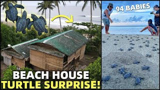 BecomingFilipino – BIG BEACH HOUSE SURPRISE! Turtles Hatch In Front Of Philippines Land (Cateel, Davao)