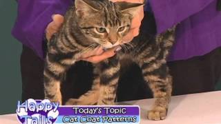 Happy Tails - Cat Coat Patterns