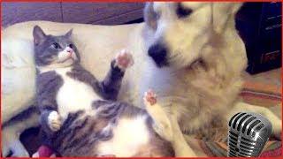 Смотреть самые смешные кошки! видео 2017 #4 видео приколы