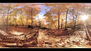 Relaxing Autumm forest VR