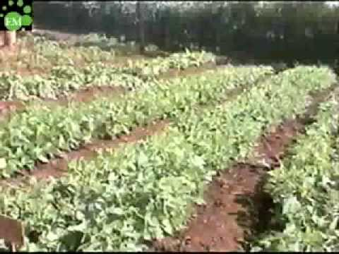 Video Benefits of Effective Microorganisms (EM) for Water, Soils & Crops