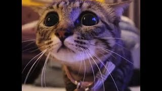 Только смешные кошки! Подборка приколов с котами, кошками и котятами