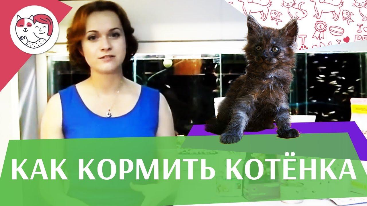 Правильное кормление котят