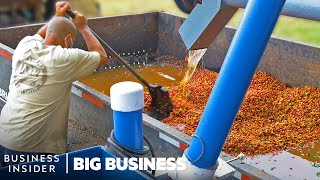 How Millions Of Pounds Of Coffee Are Processed At Hawaiian Coffee Farms   Big Business