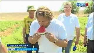60 тысяч тонн арбузов планируют собрать в этом году фермеры Енотаевского района