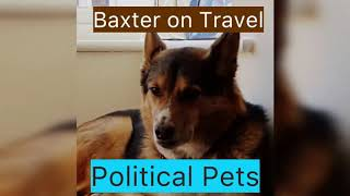 Where is Baxter going on holiday? Not with Trump! (Political Pets)