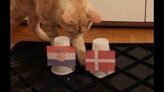 Croatia Vs Denmark - Cats World Cup 2018 Prediction