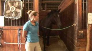 Horse Care & Buying Tips : How To Take Care Of An Older Horse