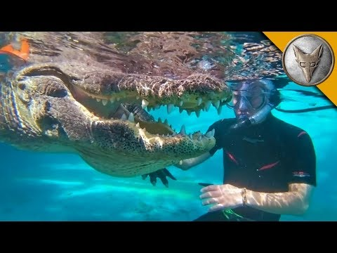 Download JAWS! Swimming with Gators! HD Mp4 3GP Video and MP3