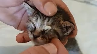 Cat Rescue | Remove Ticks And Flea Infection In The Eyes Of 4 Kitten