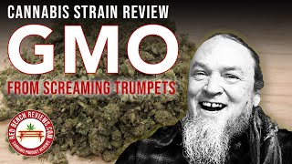Screaming Trumpets |  GMO Strain Review | 33.09% THC! by Red Bench Reviews