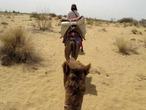 Indian Camel Safari in Rajasthan (Great