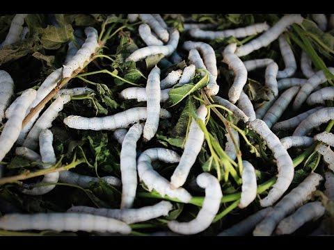 Die Würmer des Fotos und des Bildes