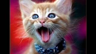Nieuwjaarskaarten, Katten zingen happy new year