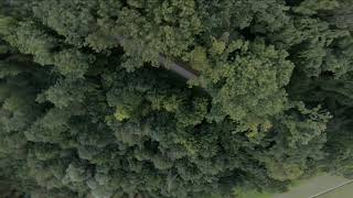 FPV Forest Flow
